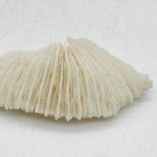 Coleccionismo de fósiles: FÓSIL. Lote 285403193