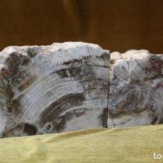 Coleccionismo de fósiles: PAREJA DE XILÓPALOS, MADERA FÓSIL (TRIÁSICO ARGENTINO). 200-250 MILLONES DE AÑOS. Lote 287267608