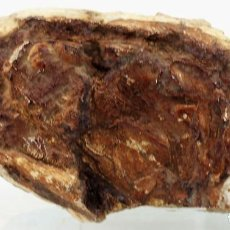 Coleccionismo de fósiles: FÓSIL, EN NÓDULO CALCÁREO, CABEZA DE ANIMAL, SIN IDENTIFICAR, PROCEDENCIA URUGUAY. Lote 287311178