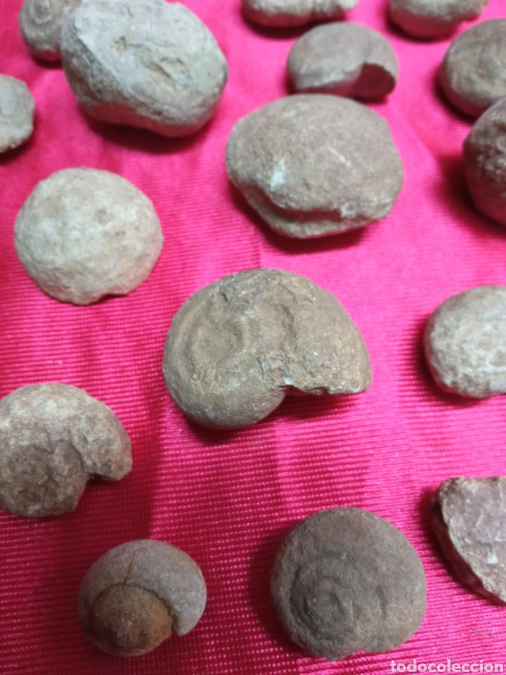 Coleccionismo de fósiles: Lote 26 pequeños fosiles - Foto 3 - 288866483