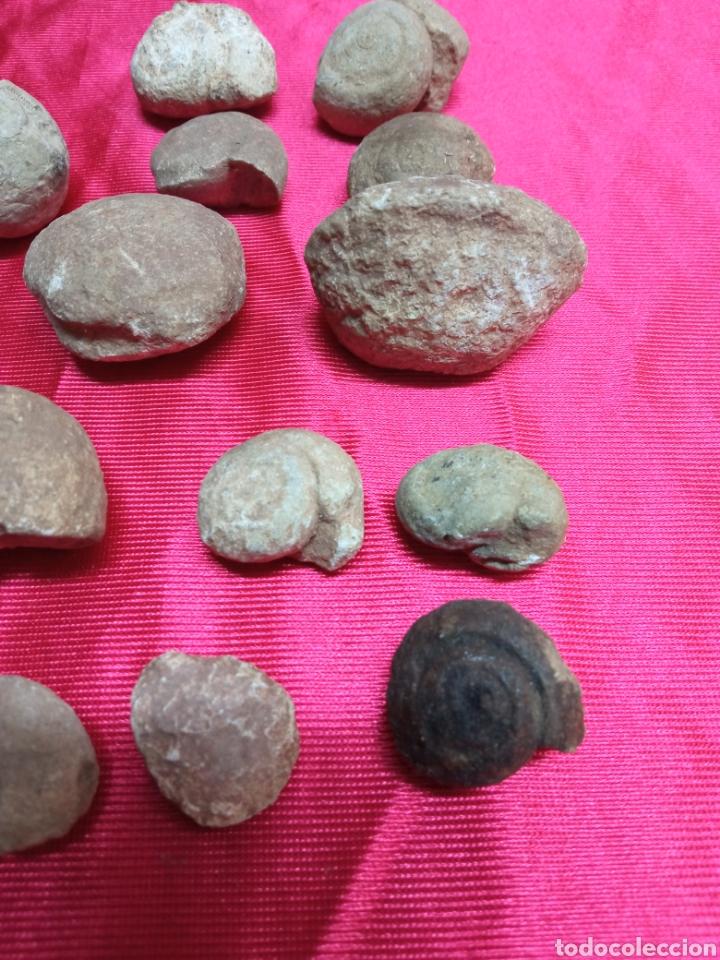 Coleccionismo de fósiles: Lote 26 pequeños fosiles - Foto 4 - 288866483