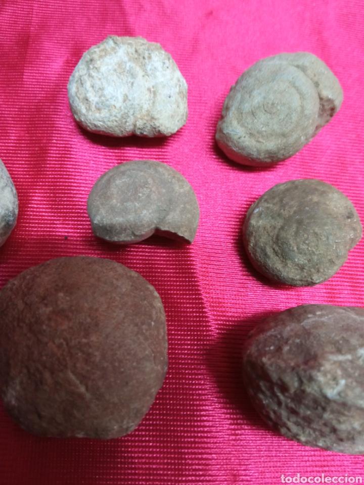 Coleccionismo de fósiles: Lote 26 pequeños fosiles - Foto 6 - 288866483