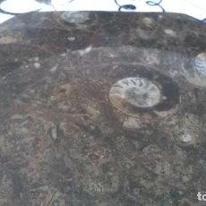Coleccionismo de fósiles: PLATO OCTOGONAL CON FOSILES. Lote 290649013