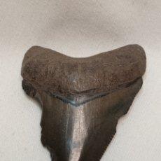 Coleccionismo de fósiles: FÓSIL DIENTE DE TIBURÓN. Lote 293837573