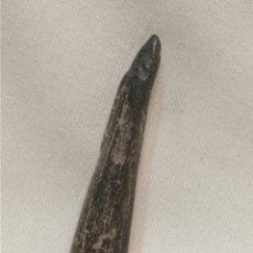 Coleccionismo de fósiles: FÓSIL ASTA DE CÉRVIDO. Lote 293838118