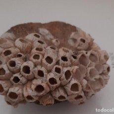 Coleccionismo de fósiles: FOSIL ROCA PIEDRA. Lote 293919193