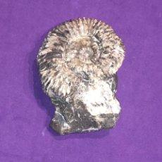 Coleccionismo de fósiles: FÓSIL DE AMMONITE PARCIALMENTE EN SU MATRIZ, BUEN TAMAÑO. DEVÓNICO S.(370 MO. DE AÑOS), INN F6. Lote 297381768