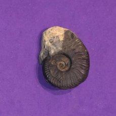 Coleccionismo de fósiles: FÓSIL DE AMMONITES , JURÁSICO. INN-F9. Lote 297383313