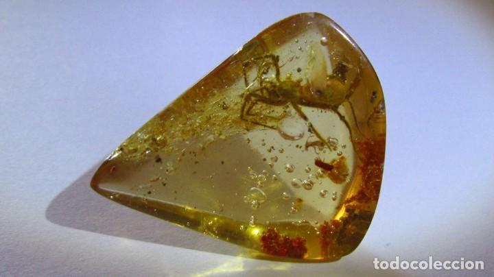 Coleccionismo de gemas: 30,60 CT COPAL - AMBAR NATURAL CON UNA ARAÑA CON MILES DE AÑOS DE ANTIGUEDAD - Foto 3 - 164818566