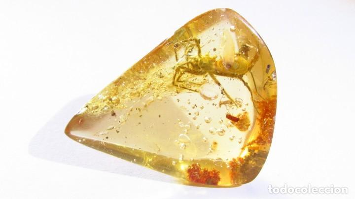 Coleccionismo de gemas: 30,60 CT COPAL - AMBAR NATURAL CON UNA ARAÑA CON MILES DE AÑOS DE ANTIGUEDAD - Foto 5 - 164818566