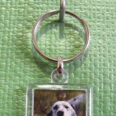 Coleccionismo de llaveros: LLAVERO PERRO - DOG KEYRING - KEYCHAIN. Lote 47599054