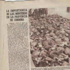 ABC AÑO 1955 LAS MONTERIAS EN CORDOBA EL AGUILA CAZA VIADUCTO DE LA CAROLINA A UBEDA JAEN CHILLIDA