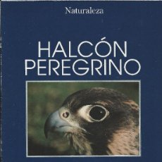 Collectionnisme de Los Domingos de ABC: HALCON PEREGRINO- SUPLEMENTO DE NATURALEZA DE REVISTAS ABC/BLANCO Y NEGRO. Lote 34996474