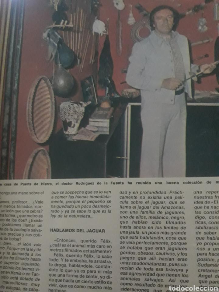 Coleccionismo de Los Domingos de ABC: ENTREVISTA A FELIX RODRÍGUEZ DE LA FUENTE. TICO MEDINA AÑO 1975 . 4 PAGINAS - Foto 2 - 194530110