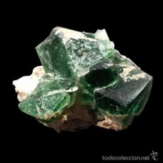 Coleccionismo de minerales: *** PRECIOSOS CRISTALES DE FLUORITA VERDE. ALTYN TYUBE (KAZAKHSTAN) ***. Lote 99270375