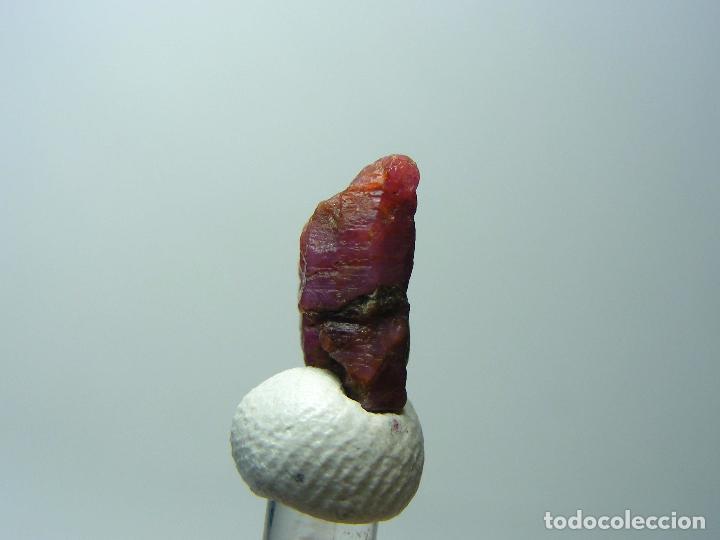 Coleccionismo de minerales: FD MINERALES: CRISTAL DE RUBÍ DIENTE DE PERRO - LUCYEN - VIETNAM - MUY FLUORESCENTE - V 17 - Foto 2 - 73054599