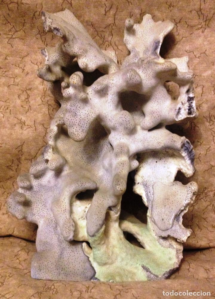 GRAN PIEZA DE CORAL MARINO AZUL GRISACEO.- DECORACIÓN- (Coleccionismo - Mineralogía - Otros)
