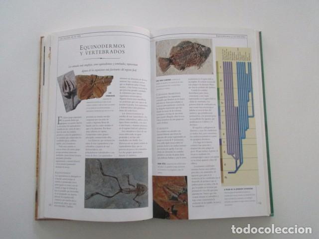Coleccionismo de minerales: ROCAS Y FÓSILES, - Foto 4 - 105728575