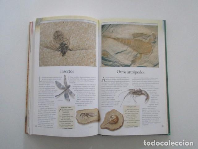 Coleccionismo de minerales: ROCAS Y FÓSILES, - Foto 5 - 105728575