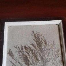 Coleccionismo de minerales: DENDRITA ENMARCADA.. Lote 110202315