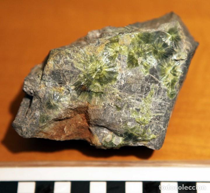 WAVELLITA PROCEDENTE DE ARKANSAS (Coleccionismo - Mineralogía - Otros)