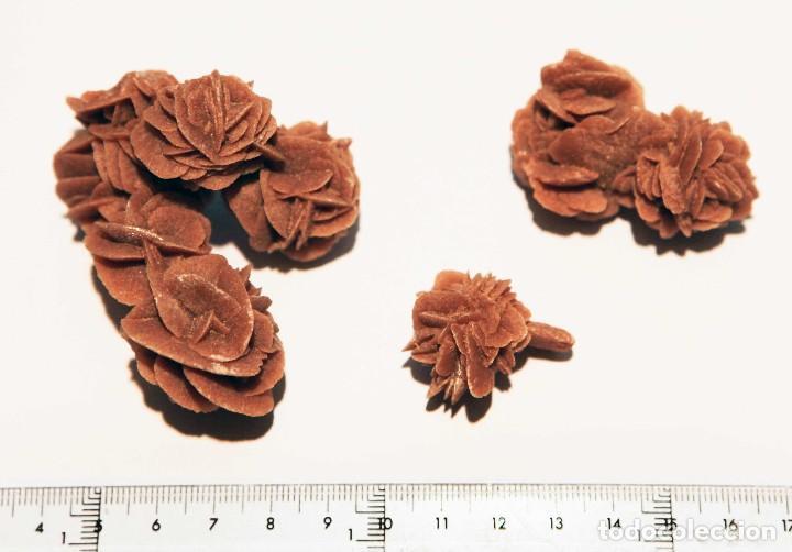 3 ROSAS DEL DESIERTO (Coleccionismo - Mineralogía - Otros)