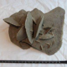 Coleccionismo de minerales: ROSA DEL DESIERTO.FLOR DE ARENA.DESIERTO DE SAMALAYUCA. PESO: 1.250 GR. DIMENSIONES:11 X 15 X 14 CM.. Lote 69812550