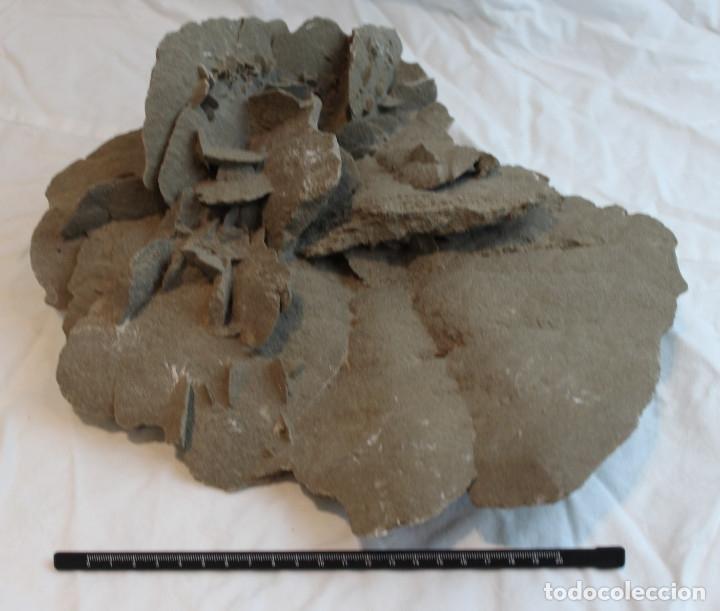 ROSA DEL DESIERTO.FLOR DE ARENA.DESIERTO DE SAMALAYUCA.PESO:3.600 GR.DIMENSIONES: 24 X 31 X 13 CM. (Coleccionismo - Mineralogía - Otros)