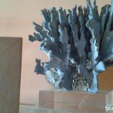 Coleccionismo de minerales: CORAL AZUL . Lote 147971694