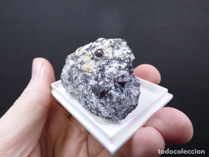Coleccionismo de minerales: FD MINERALES: GRANATES ALMANDINOS - NIJAR - ALMERÍA - ANDALUCÍA - ESPAÑA - L+189 - Foto 3 - 153115846