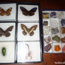 Coleccionismo de minerales: ENTOMOLOGIA Y MINERALOGIA. 15 MINERALES Y SEIS BICHOS, EN ESTUCHE.. Lote 165516642