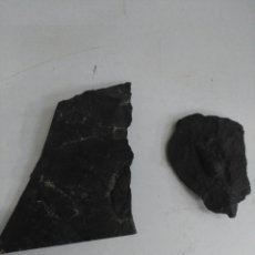 Coleccionismo de minerales: LOTE DE FÓSILES. Lote 171387338