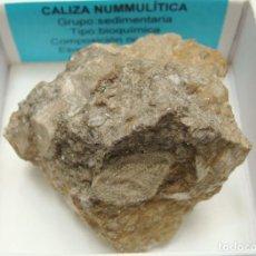 Coleccionismo de minerales: FORMATO 6 X 6 - CALIZA NUMMULÍTICA. Lote 210972901
