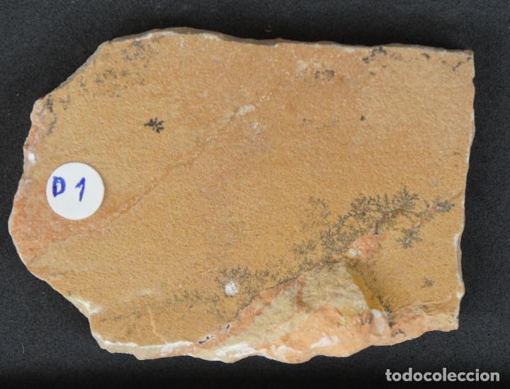 Coleccionismo de minerales: Dendritas de pirolusita sobre caliza tableada - Foto 3 - 191943323