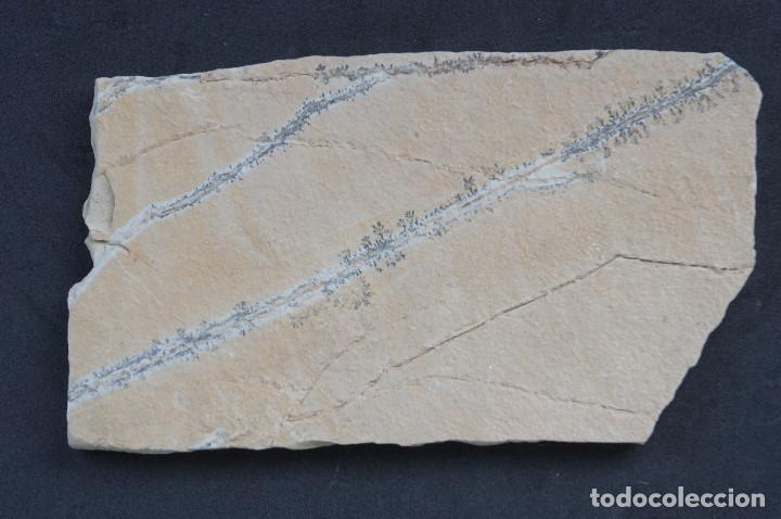 Coleccionismo de minerales: Dendritas de pirolusita sobre caliza tableada - Foto 3 - 191943702