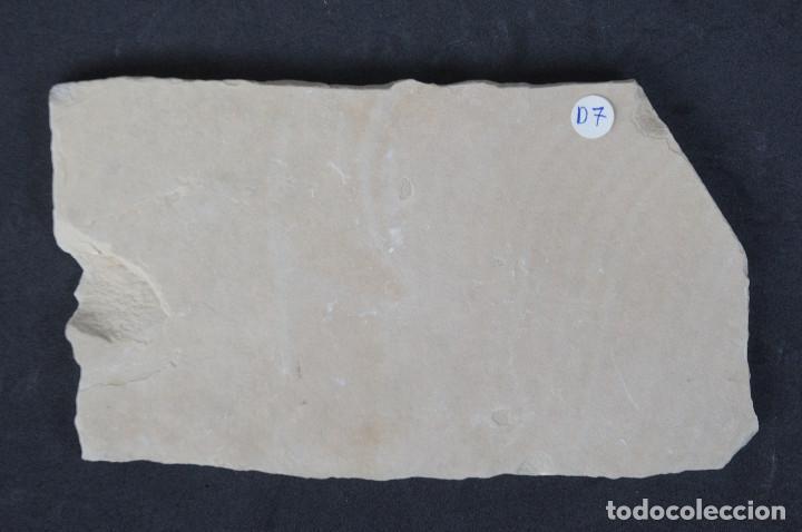 Coleccionismo de minerales: Dendritas de pirolusita sobre caliza tableada - Foto 5 - 191943702