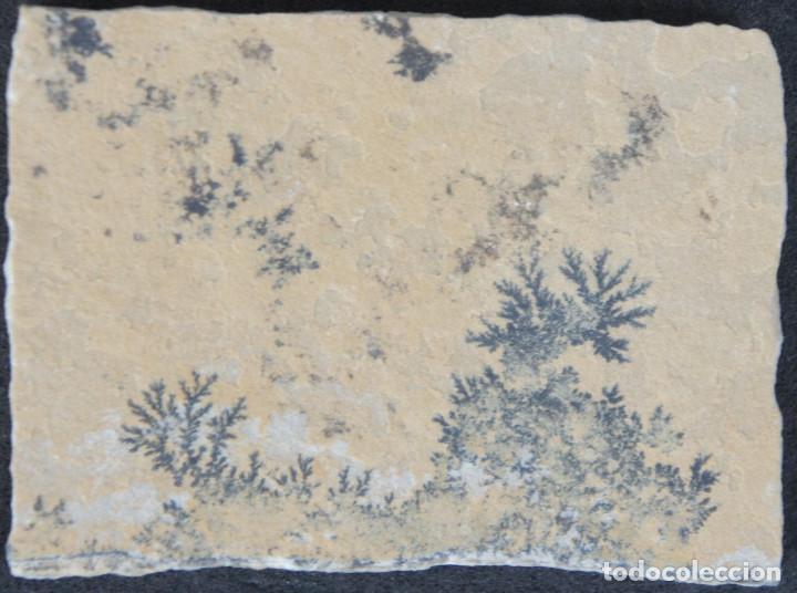 Coleccionismo de minerales: Dendritas de pirolusita sobre caliza tableada - Foto 2 - 191943888
