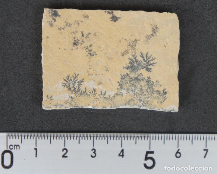 DENDRITAS DE PIROLUSITA SOBRE CALIZA TABLEADA (Coleccionismo - Mineralogía - Otros)