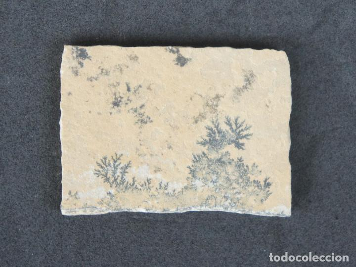 Coleccionismo de minerales: Dendritas de pirolusita sobre caliza tableada - Foto 3 - 191943888