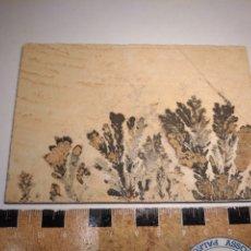 Coleccionismo de minerales: DENDRITAS DE MANGANESO. ALEMANIA.. Lote 224663993