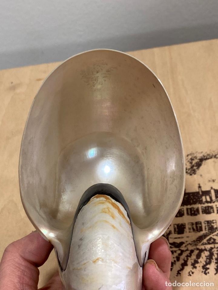 Coleccionismo de minerales: Preciosa concha de nácar tipo nautilus, preciosa - Foto 4 - 266067903