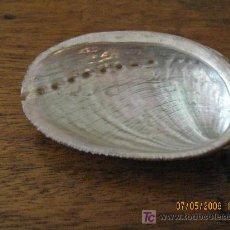 Coleccionismo de moluscos: CONCHA DE COLECCION. Lote 27419060