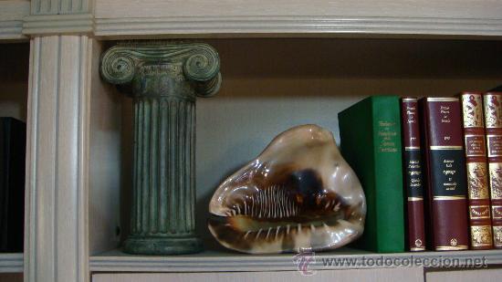 Coleccionismo de moluscos: CONCHA DE CARACOLA INDONESIA + 70 AÑOS ¡¡¡SOLO HOY!!!! - Foto 12 - 31972072