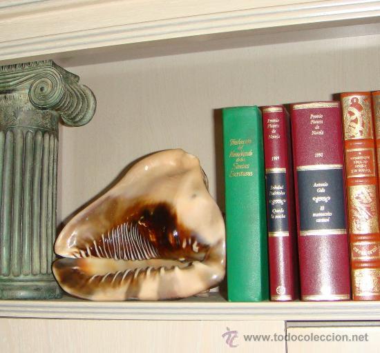 Coleccionismo de moluscos: CONCHA DE CARACOLA INDONESIA + 70 AÑOS ¡¡¡SOLO HOY!!!! - Foto 14 - 31972072