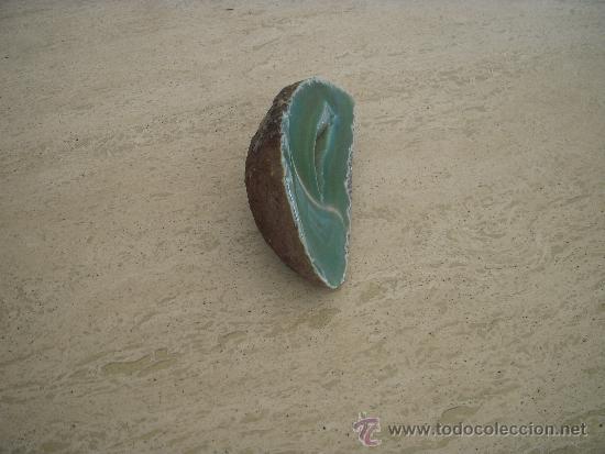 Coleccionismo de moluscos: geoda - Foto 3 - 34100215