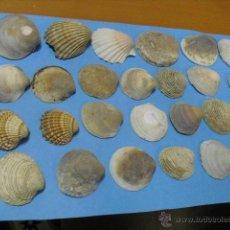 Coleccionismo de moluscos: 26 CONCHAS MARINAS. Lote 39938991