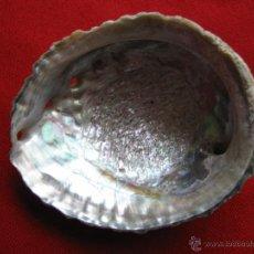 Coleccionismo de moluscos: CONCHA NACAR,OREJA DE MAR,HALIOTIS.10,5 X 8,5 X 4 CM.. Lote 45331350