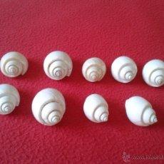 Coleccionismo de moluscos: BONITO LOTE DE 9 CARACOLAS CONCHAS DE MAR CARACOLES IDEAL COLECCIONISTAS, DECORACION VER DESCRIPCION. Lote 45546995