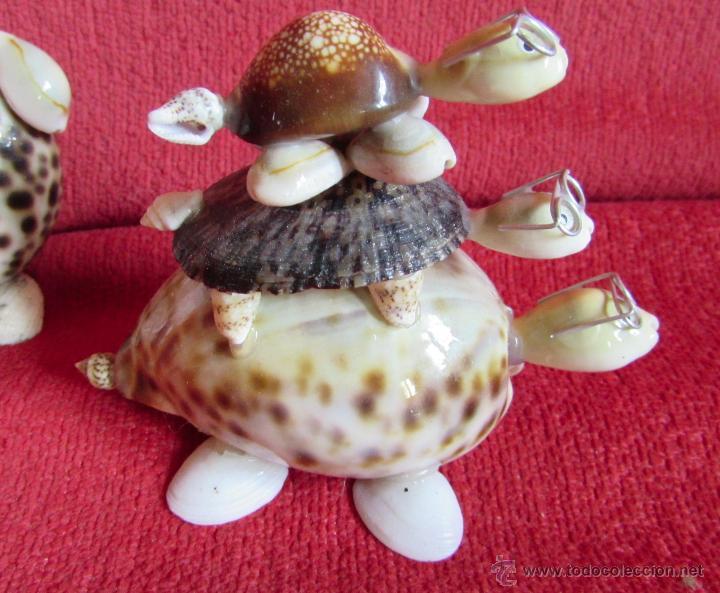 Coleccionismo de moluscos: BONITAS FIGURAS DE CONCHAS - Foto 2 - 45928529