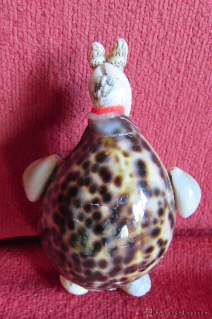 Coleccionismo de moluscos: BONITAS FIGURAS DE CONCHAS - Foto 5 - 45928529